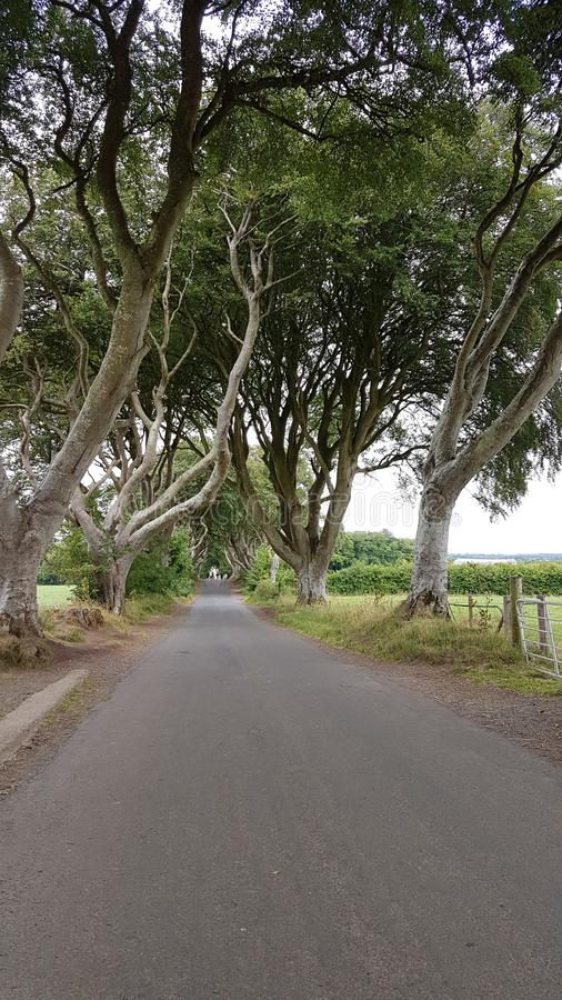 The Dark Hedges. Are an avenue of beech along Bregagh Road between Armoy and Stranocum in County Antrim, Northern Ireland.The trees are a great sight and have stock photography