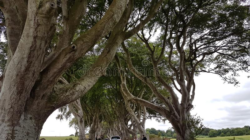 The Dark Hedges. Are an avenue of beech along Bregagh Road between Armoy and Stranocum in County Antrim, Northern Ireland.The trees are a great sight and have stock image