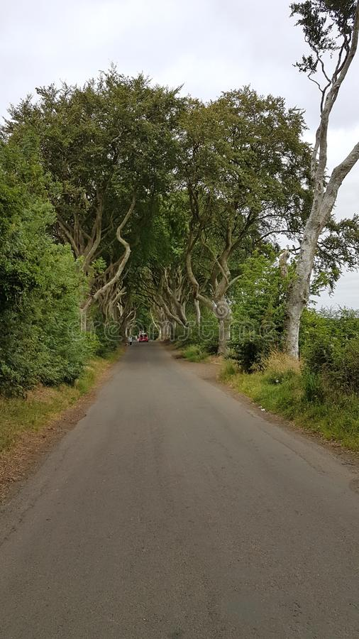 The Dark Hedges. Are an avenue of beech along Bregagh Road between Armoy and Stranocum in County Antrim, Northern Ireland.The trees are a great sight and have stock images