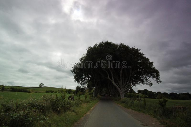 The Dark Hedges. Are an avenue of beech along Bregagh Road between Armoy and Stranocum in County Antrim, Northern Ireland.The trees are a great sight and have stock photos