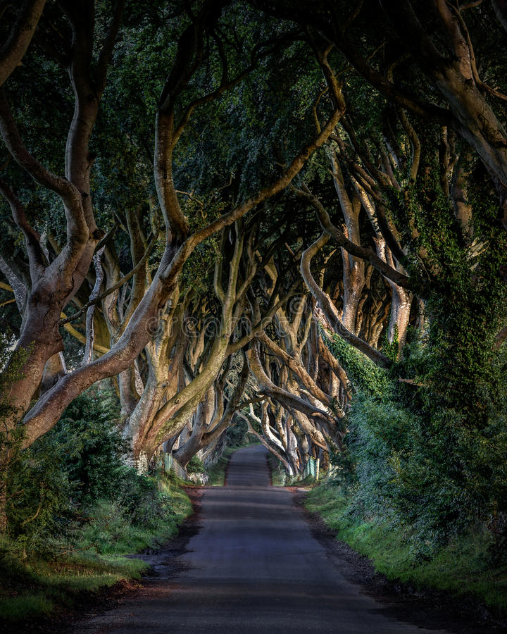 Dark hedges. The Dark Hedges of County Antrim Northern Ireland, and as featured in a popular tv series royalty free stock photos