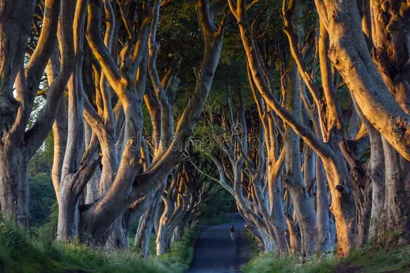The Dark Hedges - County Antrim - Northern Ireland royalty free stock photos
