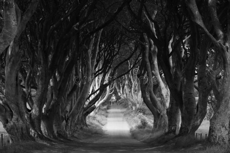 Dark Hedges dans le comté d'Antrim, en Irlande du Nord photos stock