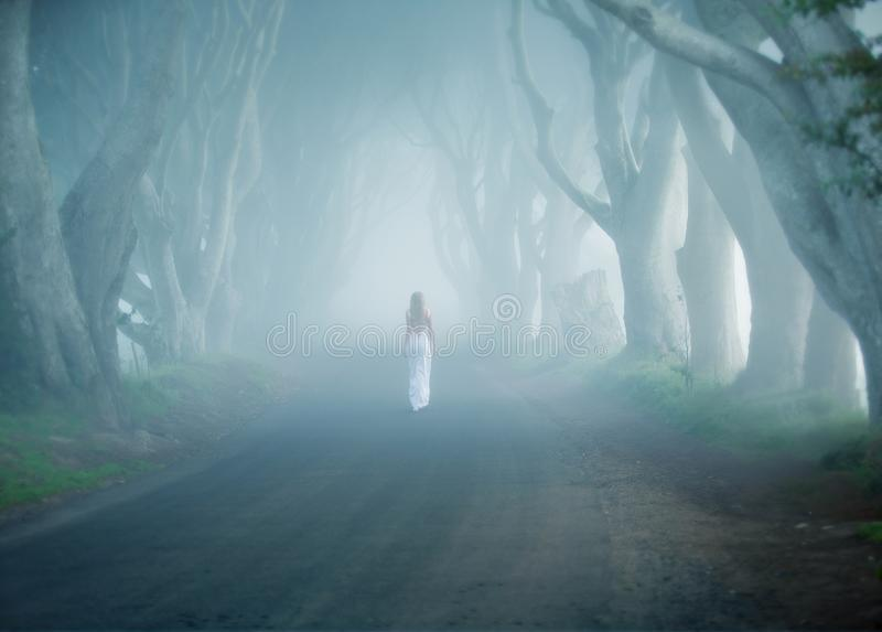 Dark Hedges, Ireland, fogy tree lined road, woman walk away in white long dress. Early morning, haze, road among trees, slim lady walks away in white dress royalty free stock photography