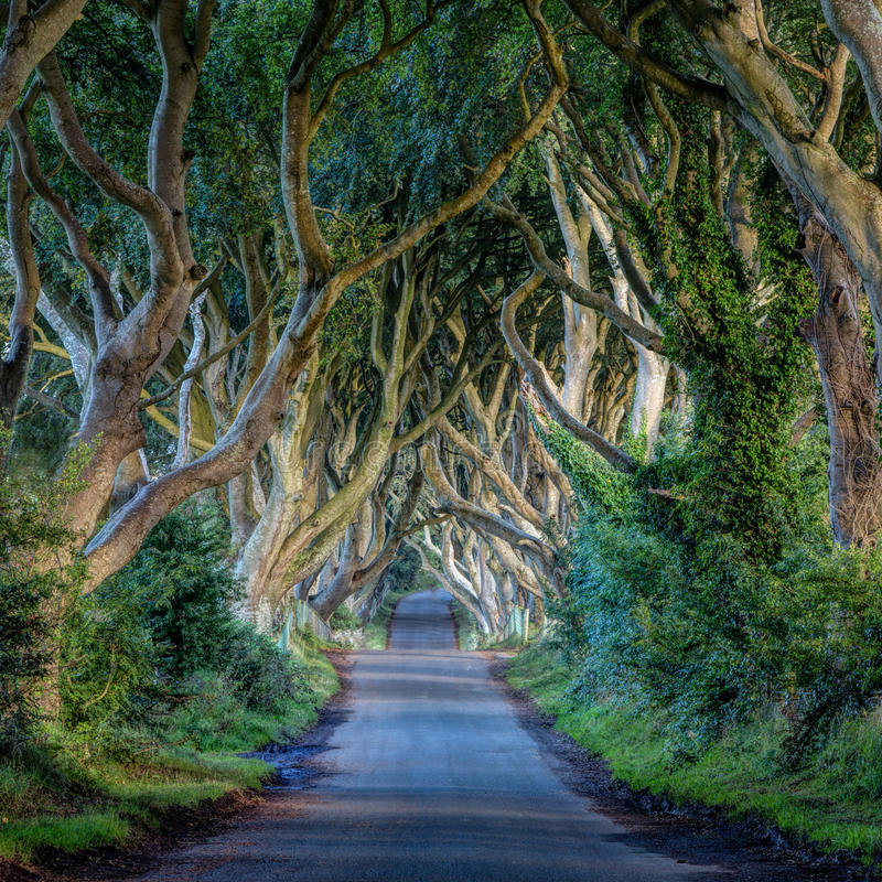 The Dark Hedges, Ireland landscape. Abstraction of gnarled branches in The Dark Hedges, Ireland over country lane royalty free stock photography