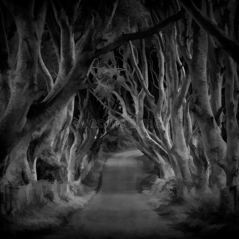 The Dark Hedges, Ireland. Path through gnarled trees of The Dark Hedges, Ireland in black and white royalty free stock photography