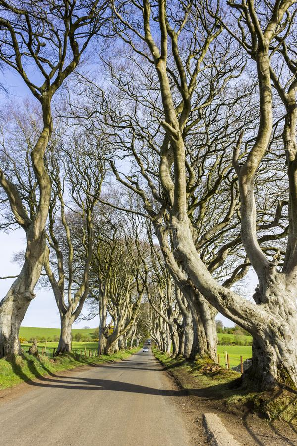 The Dark Hedges, Northern Ireland. The Dark Hedges, an avenue of beech trees in Ballymoney, County Antrim, Northern Ireland, featured as a popular filming stock photography