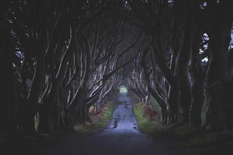 The Dark Hedges in Northern Ireland. Majestic, spooky and mysterious road across very old trees. Featured in the Game of Thrones royalty free stock photography