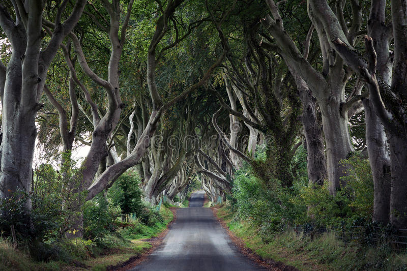 The Dark Hedges, Northern Ireland. The Dark Hedges is a unique beech tree tunnel road near Armoy, county Antrim, Northern Ireland stock photos