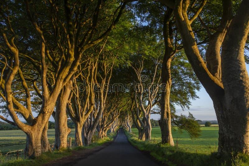 The Dark Hedges - Northern Ireland - united Kingdom royalty free stock photography