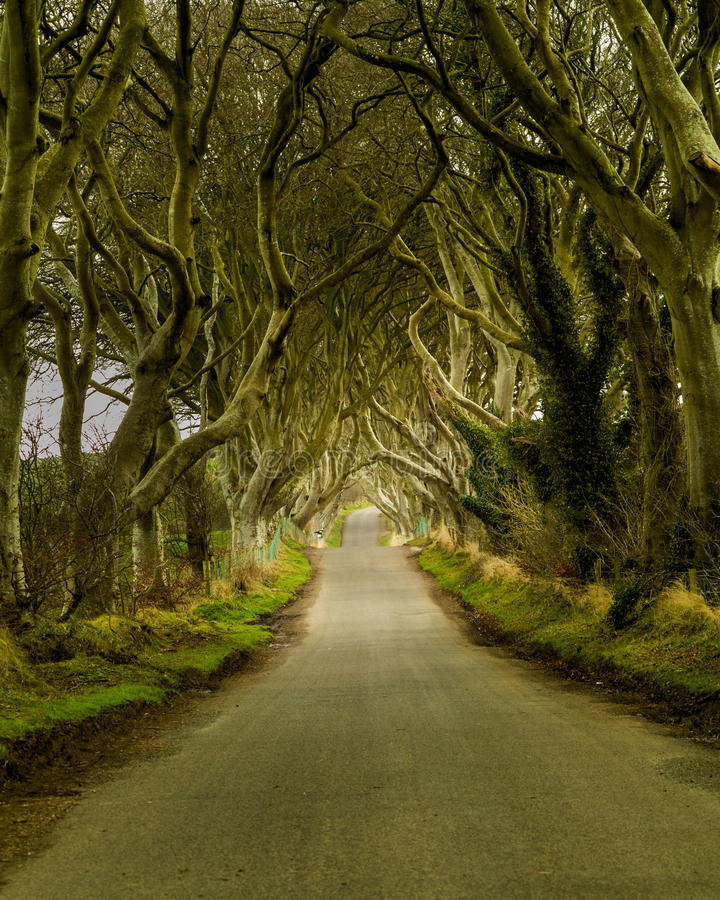 Dark Hedges road in Northern Ireland runs through old trees stock image