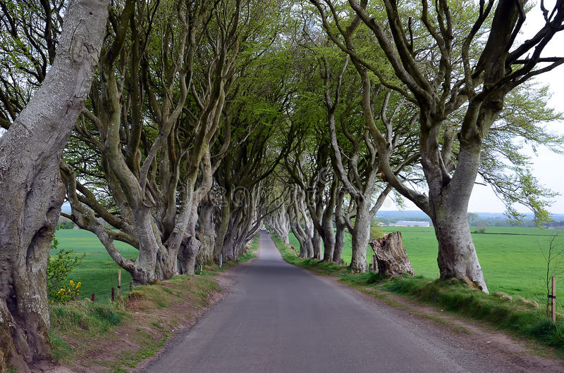 Dark Hedges stretch of road beech trees stock photography