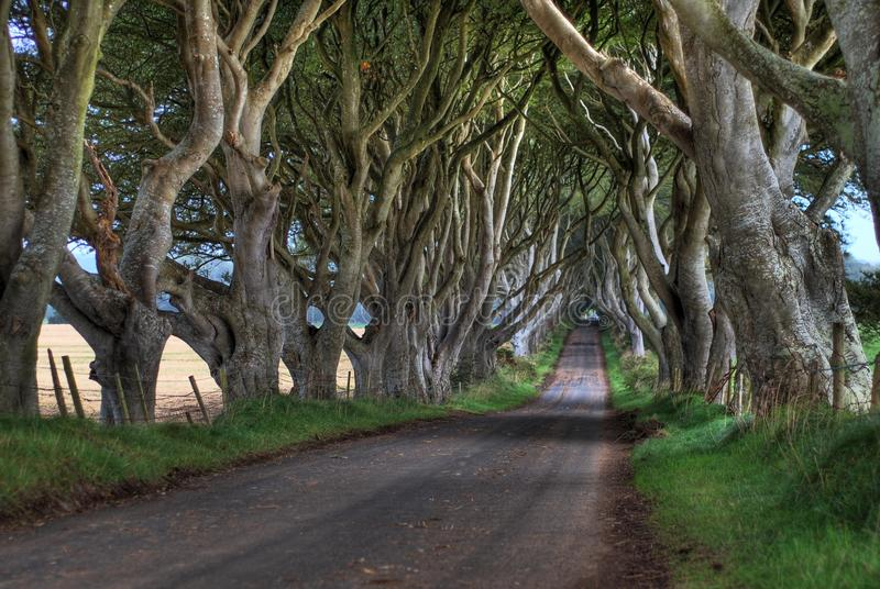 Dark Hedges Trees. A High Dynamic Range image of the famous Dark Hedges in Northern Ireland royalty free stock photography