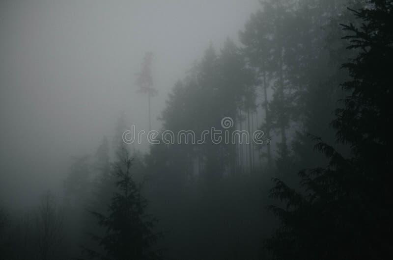 Dark Hillside Free Public Domain Cc0 Image