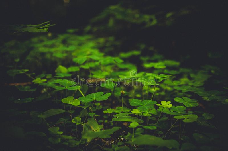 Dark image of green undergrowth royalty free stock photo