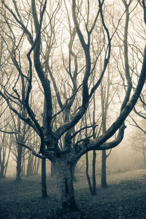 Dark infested forest by ghosts royalty free stock photography