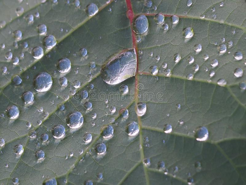 The leaf with the original water drops royalty free stock photos