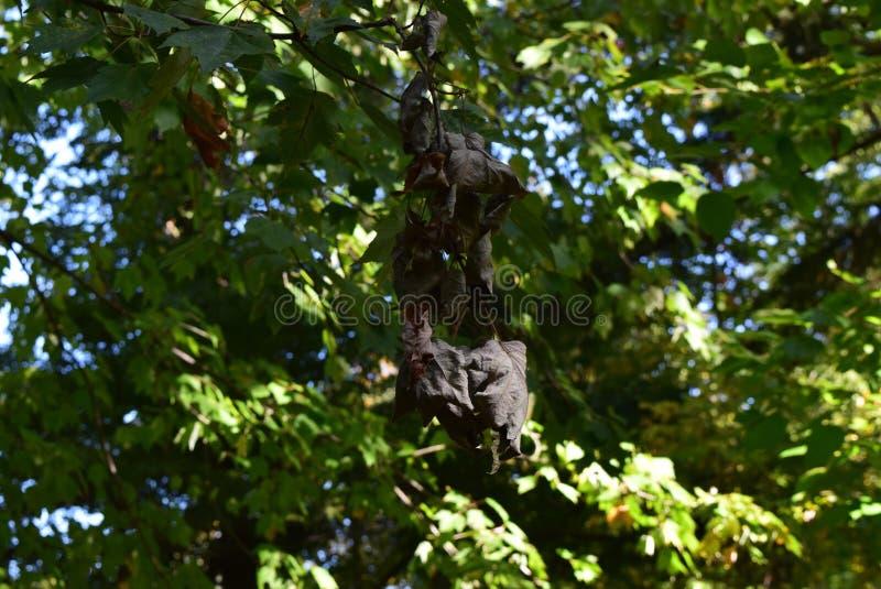 The dark leafs royalty free stock photo