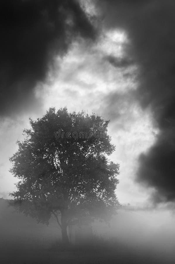 Dark lonely tree royalty free stock photography
