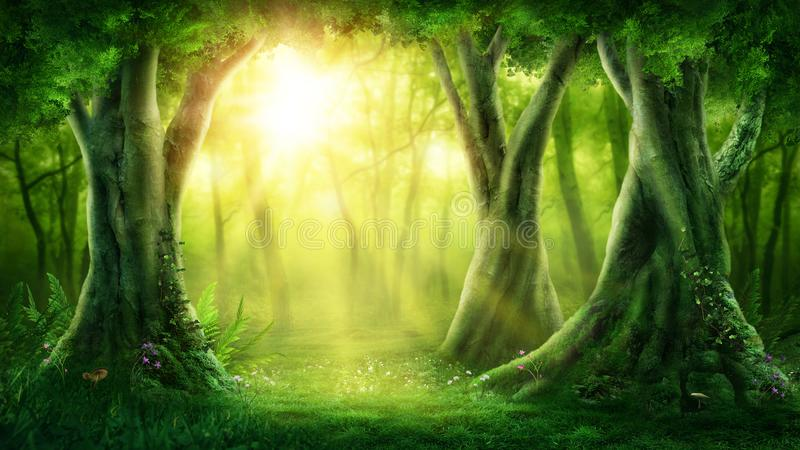 Dark magic forest stock image
