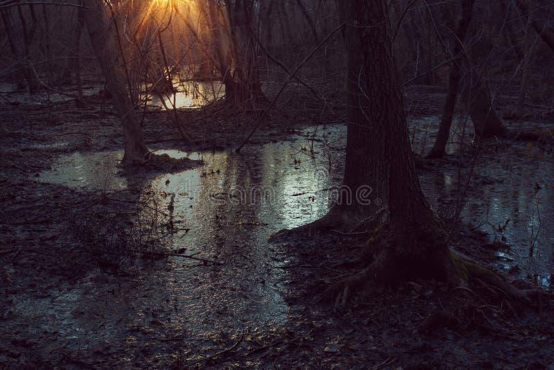 Dark marsh with sunset light stock photography