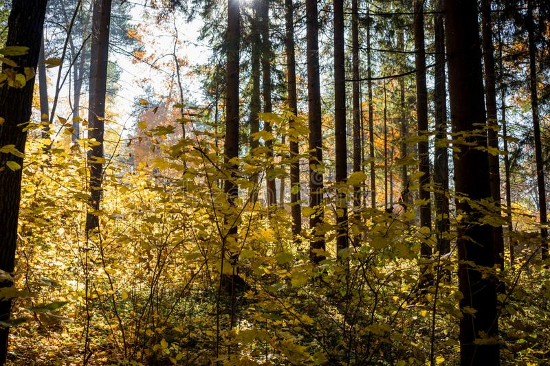 Dark mixed forest with beautiful sunlight stock photos