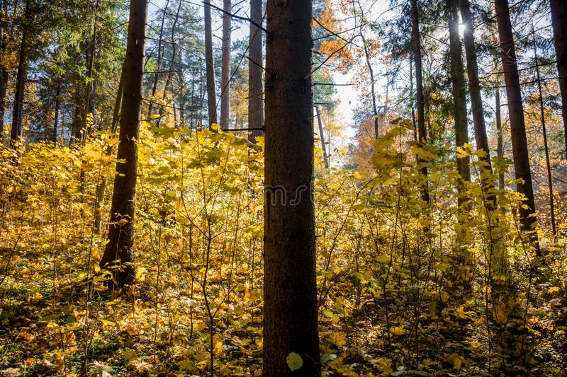 Dark mixed forest with beautiful sunlight royalty free stock photos