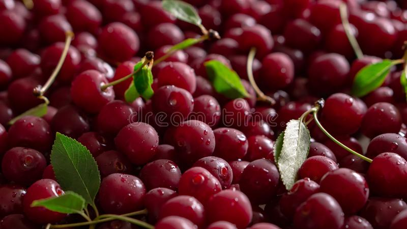 Dark mood wet cherries on a table royalty free stock photography