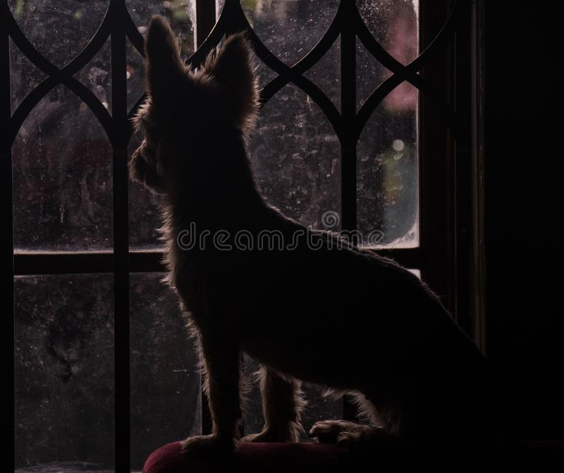 Small dog silhouetted looking through a closed window royalty free stock photos