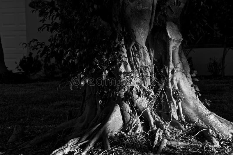 Download Dark moody  tree trunks stock image. Image of black, nature - 20073761