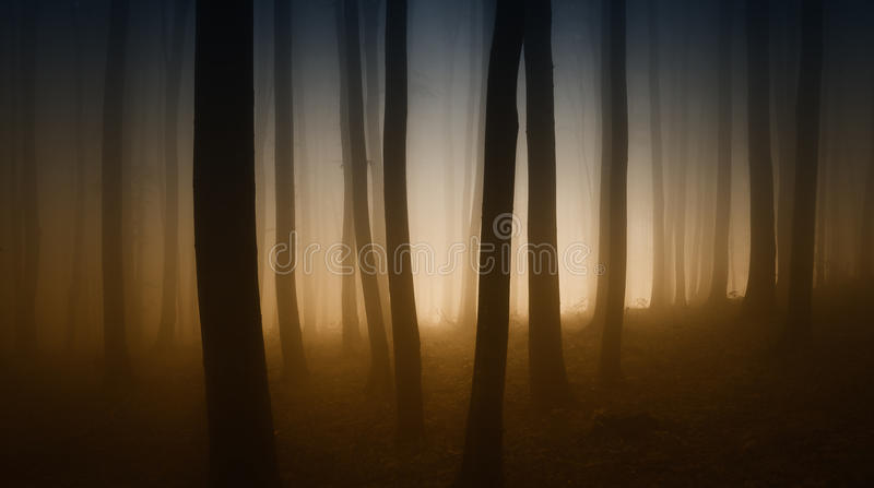 Dark mysterious forest with fog and strange colors royalty free stock image