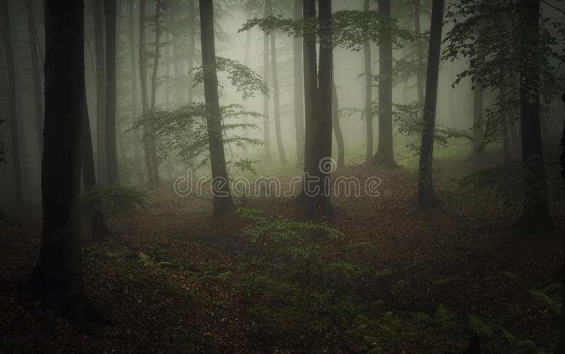Dark natural forest with fog and green vegetation royalty free stock images