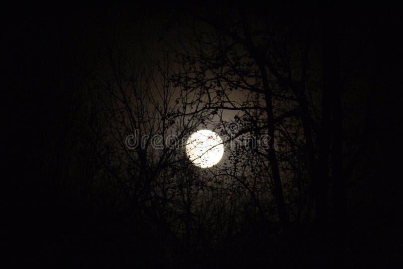 Dark night with a bight moon stock photography