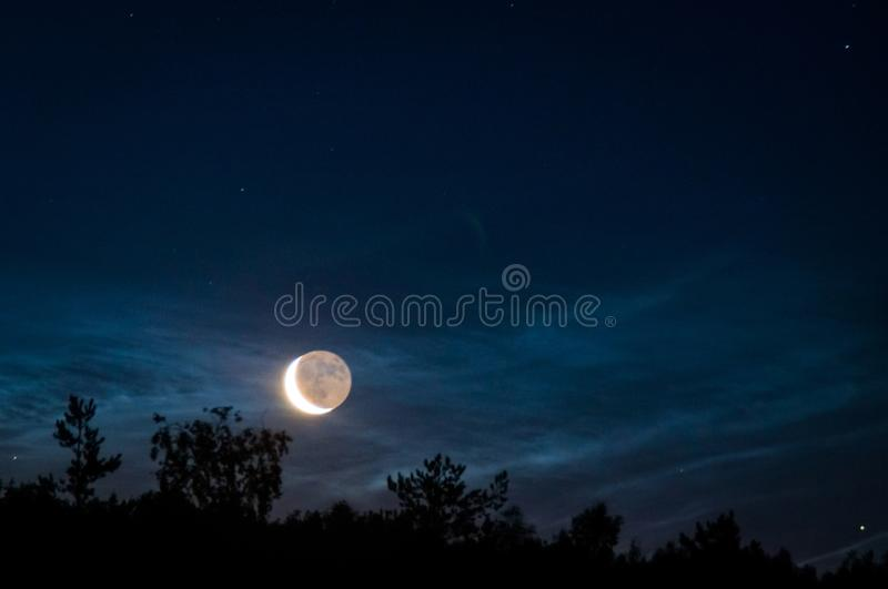 Dark night forest stock images