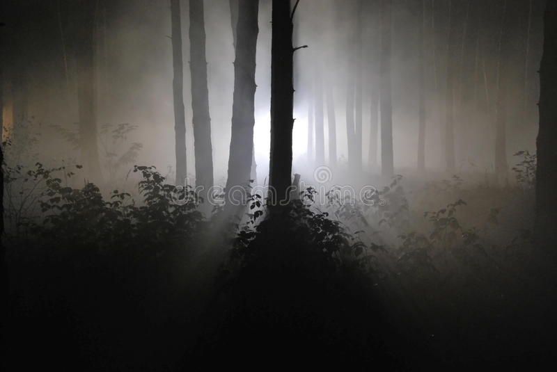 Dark night forest in a fog 02 stock photography