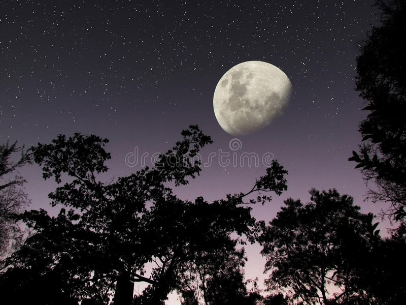 Moon stars dark forest night sky. A dark night sky with a huge half moon and stars twinkling brilliantly. It is a photo of a forest area just before dawn, with a