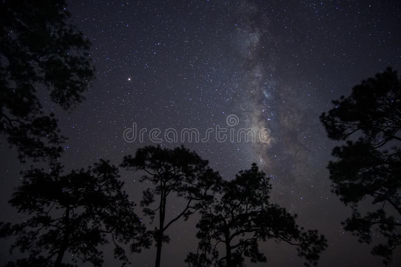 Milky Way at night in pine forest. stock images