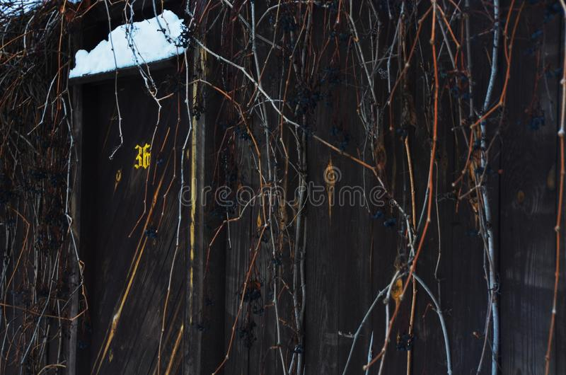 Dark old fence. With branches of wild grapes stock image