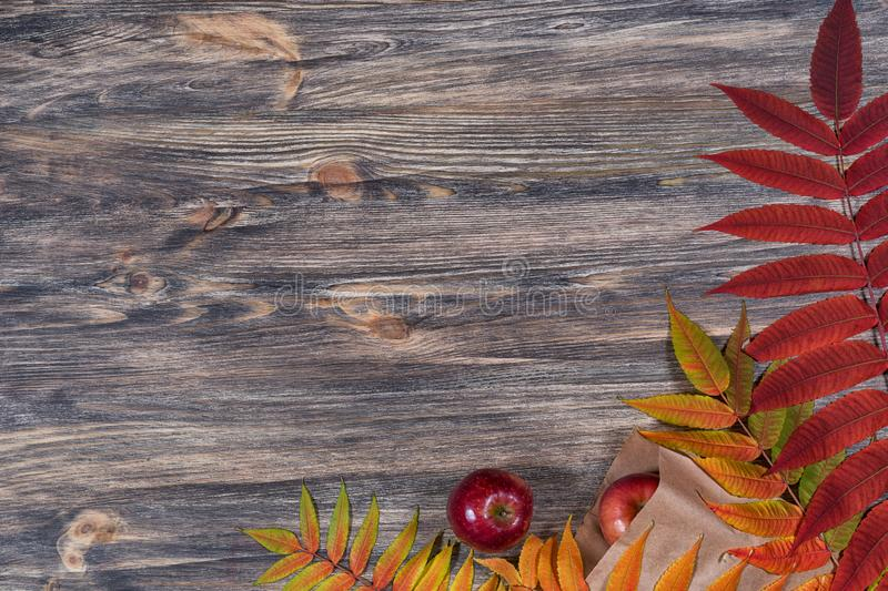 Dark old wooden background with beautiful bright colorful autumn leaves and red apples arranged in a frame. royalty free stock photo