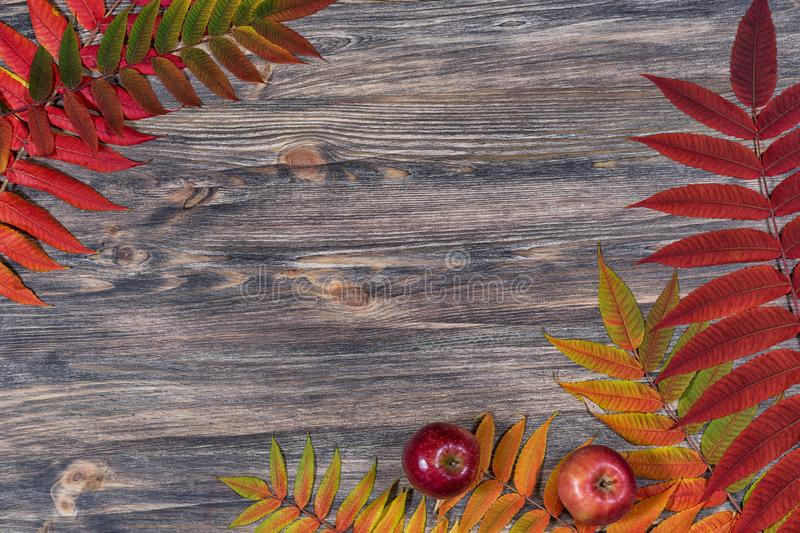 Dark old wooden background with beautiful bright multicoloured autumn leaves arranged in a frame. Vintage fall mockup. Floral border design. Top view. Flat lay stock image