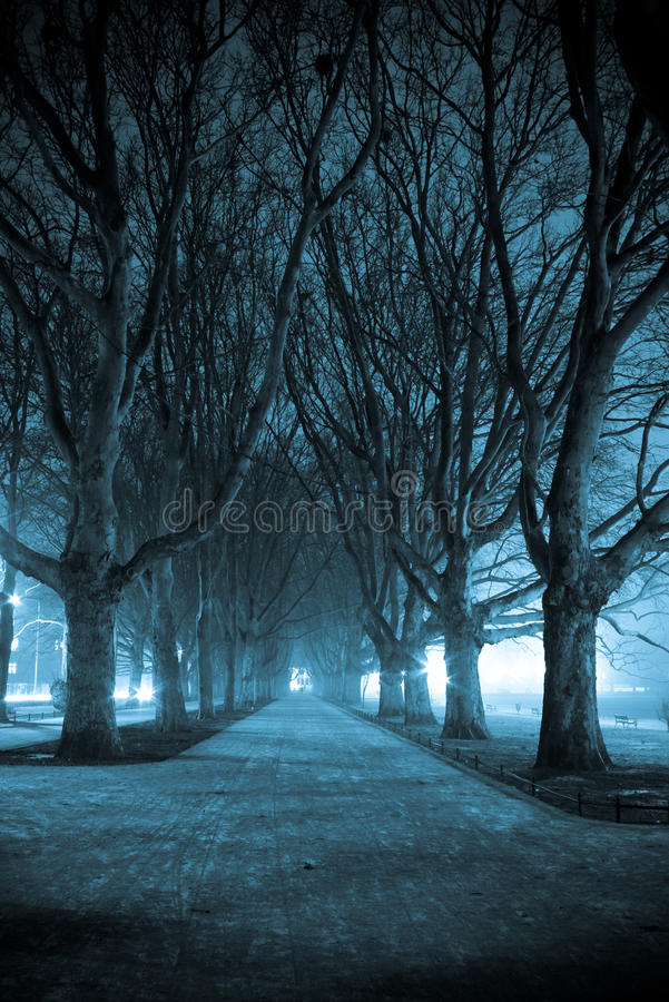 Dark park alley. At night stock photos