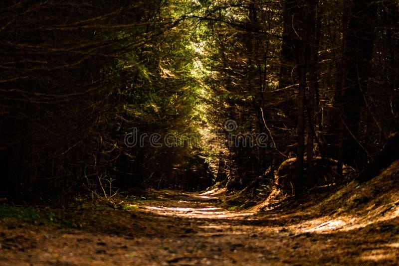 Dark path through Dalby Forest. A walk through the dark path cutting through Dalby Forest in Yorkshire royalty free stock image