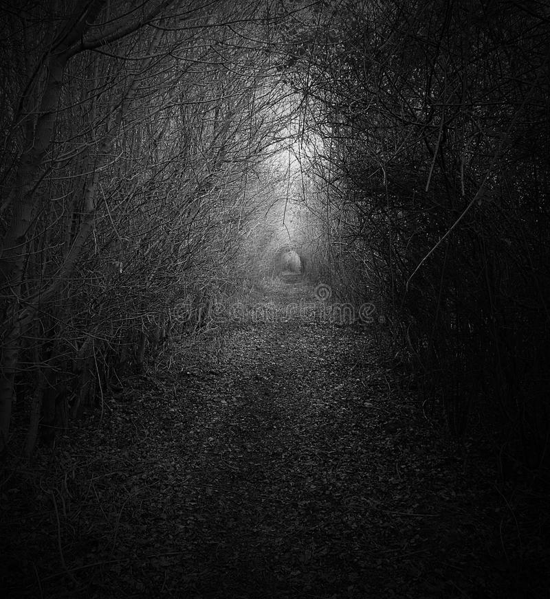 The dark path stock images