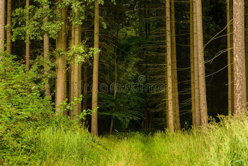 Dark path to the dense forest.  stock images