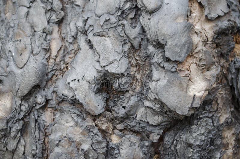 Dark pine tree bark detail royalty free stock images
