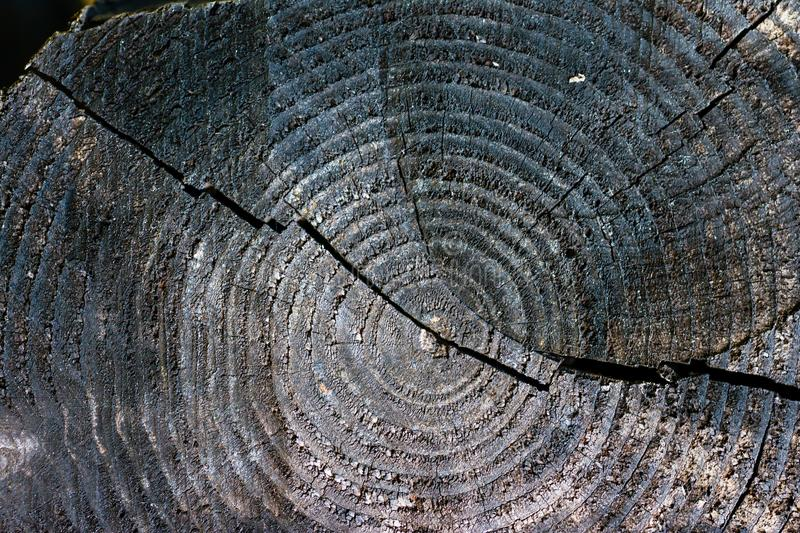 Dark planks wood, differents patterns and cracks. royalty free stock photos