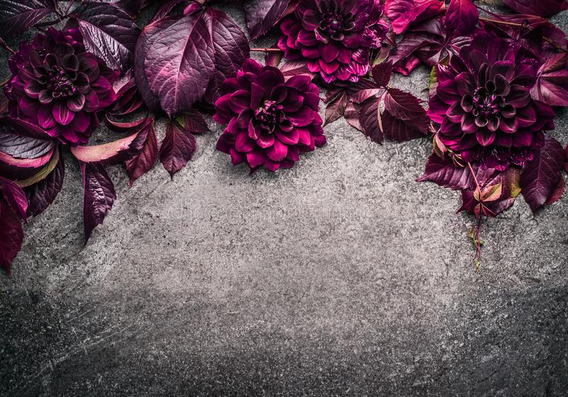 Dark purple floral border with flowers, petal and leaves on gray background, top view royalty free stock photography