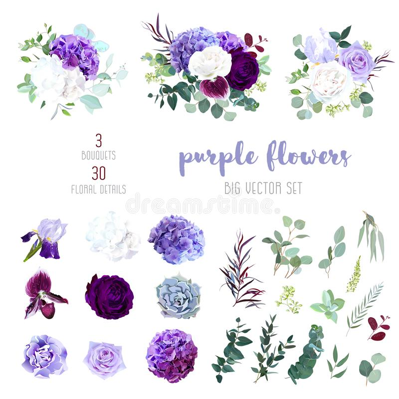 Dark purple garden rose, plum orchid, white and violet rose, lil royalty free illustration