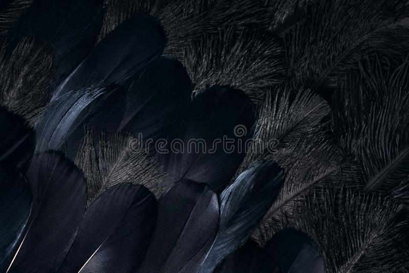 Dark raven feathers background stock photography