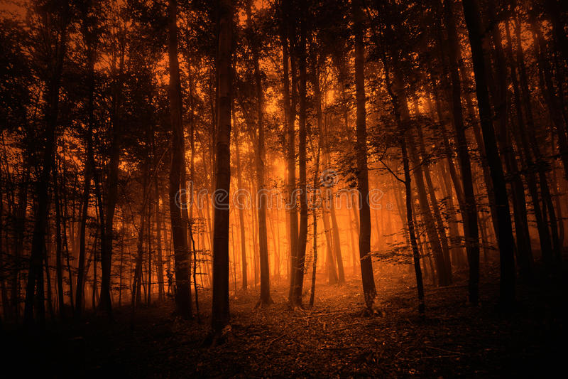 Dark red colored mystery forest background. Dark red colored mystery foggy forest trees background stock images